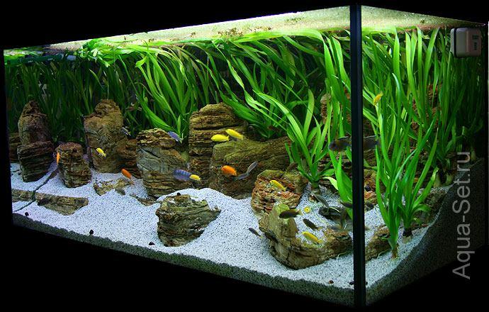 запуск аквариума с растениями видео ткани