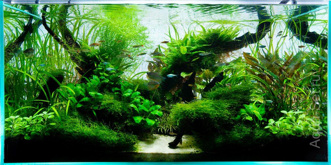 Дизайн аквариумов с растениями от ADG