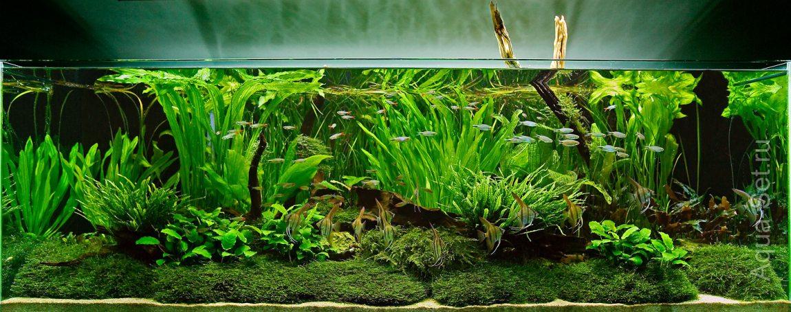 Аквариум растения дизайн