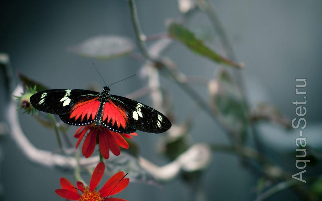 Фотоподборка бабочек и мотыльков
