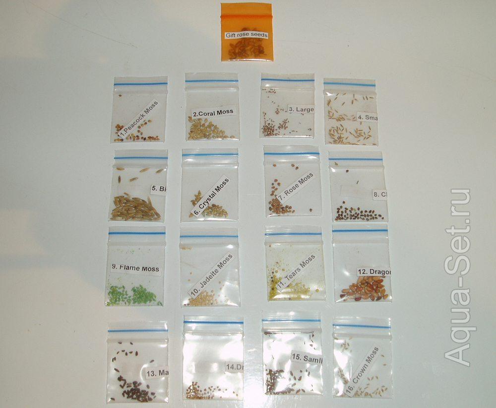 Эксперименты с аквариумными растениями. Семена из АлиЭкспресс.