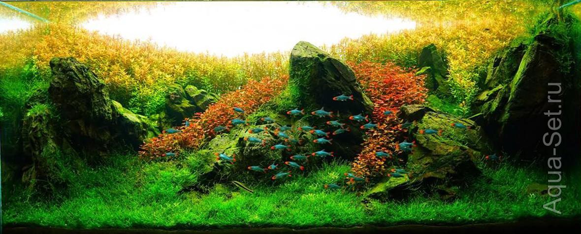 http://www.aqua-set.ru/photo/1457_11.jpg