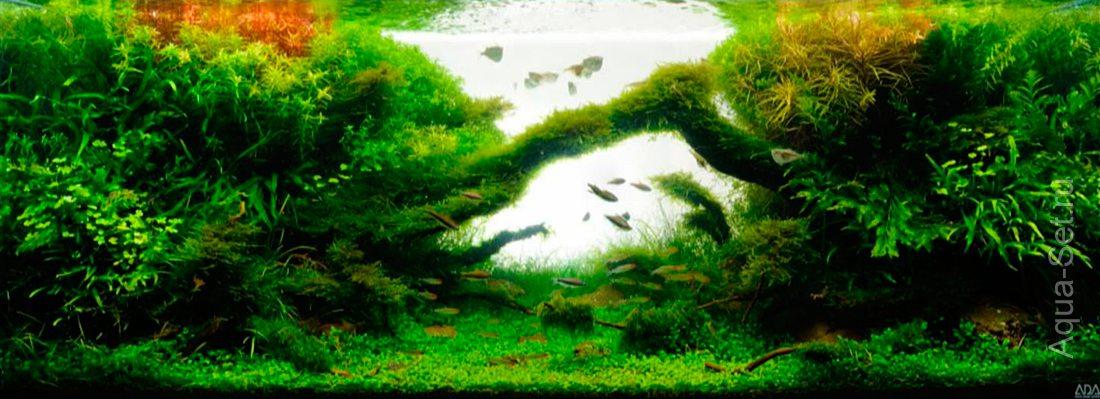 http://www.aqua-set.ru/photo/1457_14.jpg