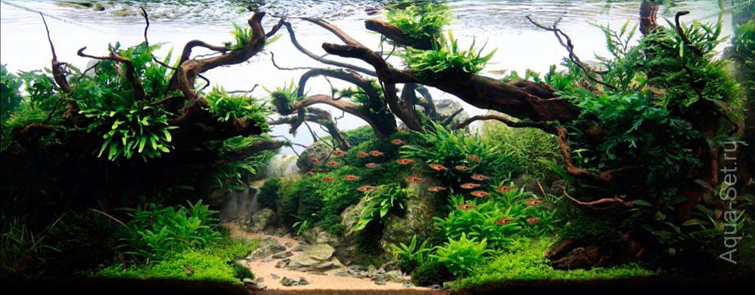 http://www.aqua-set.ru/photo/1457_16.jpg