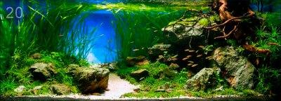 РЕЗУЛЬТАТЫ аквариумного конкурса IAPLC 2014