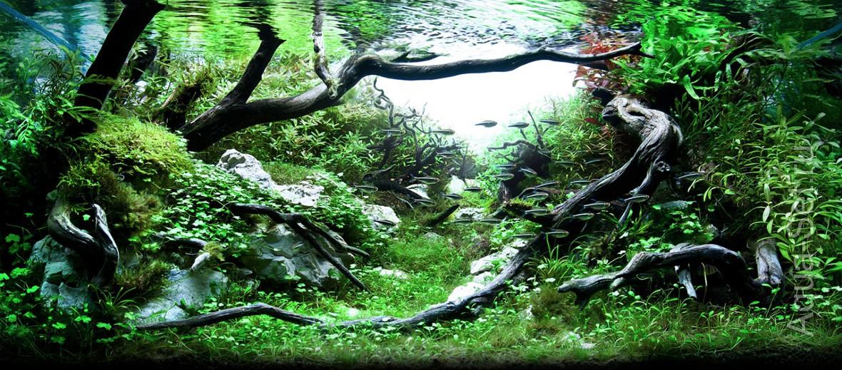 http://www.aqua-set.ru/photo/1457_4.jpg