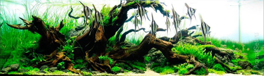 http://www.aqua-set.ru/photo/1457_8.jpg