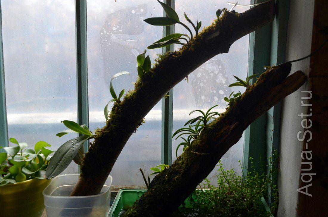 В домашних условиях посадить орхидеи семена