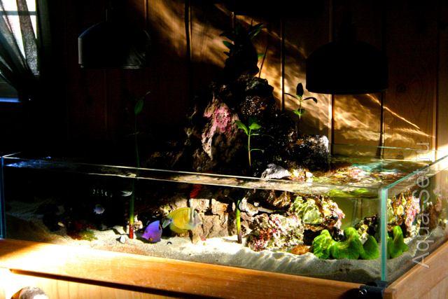 Морской аквариум от Kyle Verry. Продолжение.