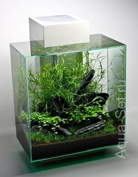 Создание аквариума Fluval Edge 2 от Oliver Knott