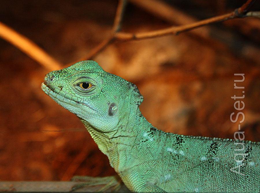 Фотографии ящериц, змей, пауков и тритонов от Котэ