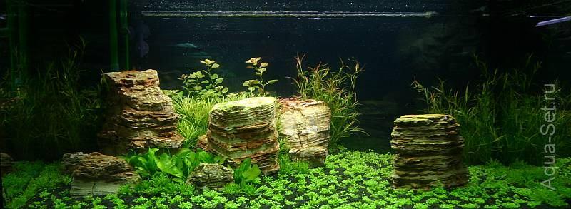 Красивый аквариум на 360л. от Оливера Кнотта
