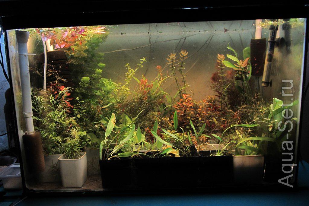 Для выращивания аквариумных растений 876