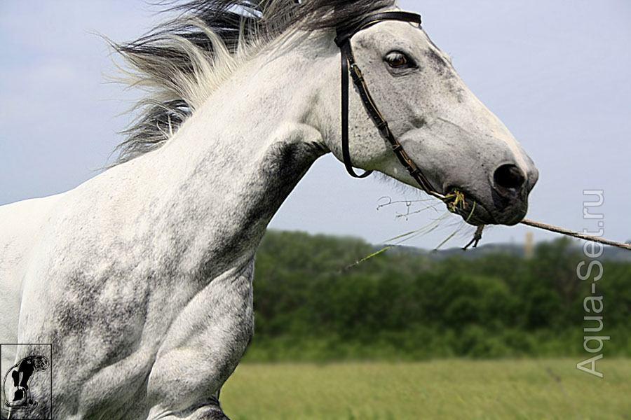 Фото лошадей от Котэ