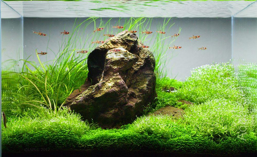 Дизайн нано аквариумов фото 3