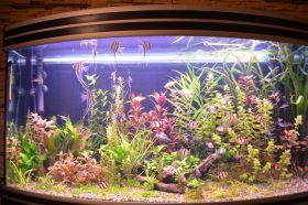 Дневник начинающего аквариумиста