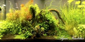 "Aquascape "" In the mountain alone"""