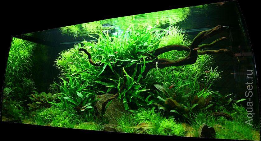 Два аквариума от Оливера Кнотта