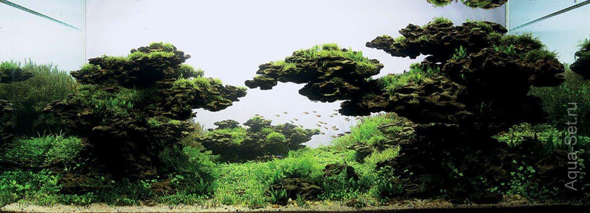 Акваскейп: Результаты IAPLC 2011