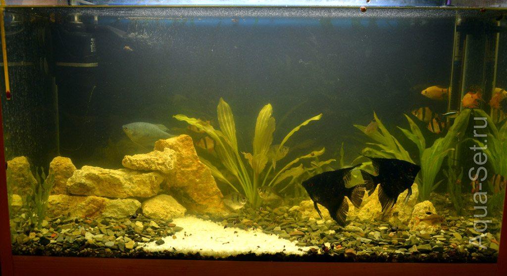 Как понизить kh в аквариуме