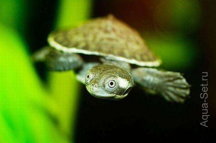 Аквариумная фотоподборка - Красота водного мира