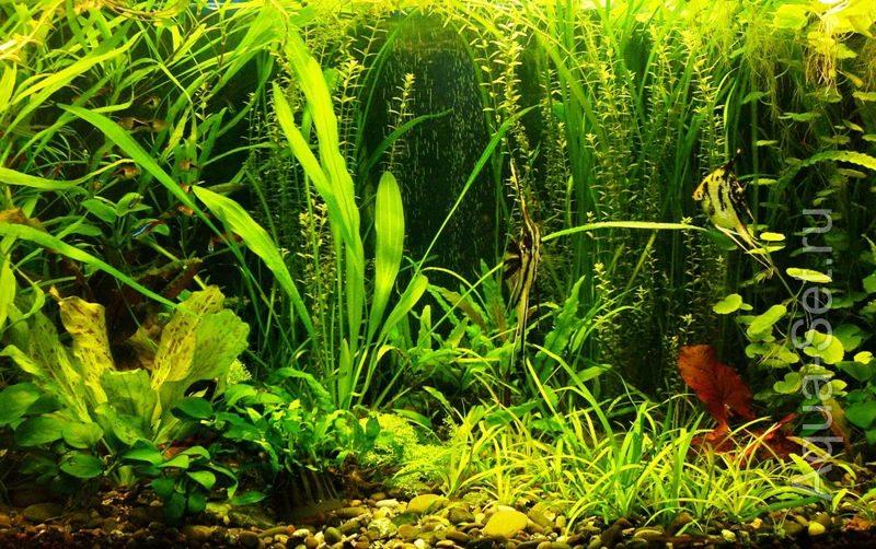 Дорога, по которой приходит утро - история развития аквариума