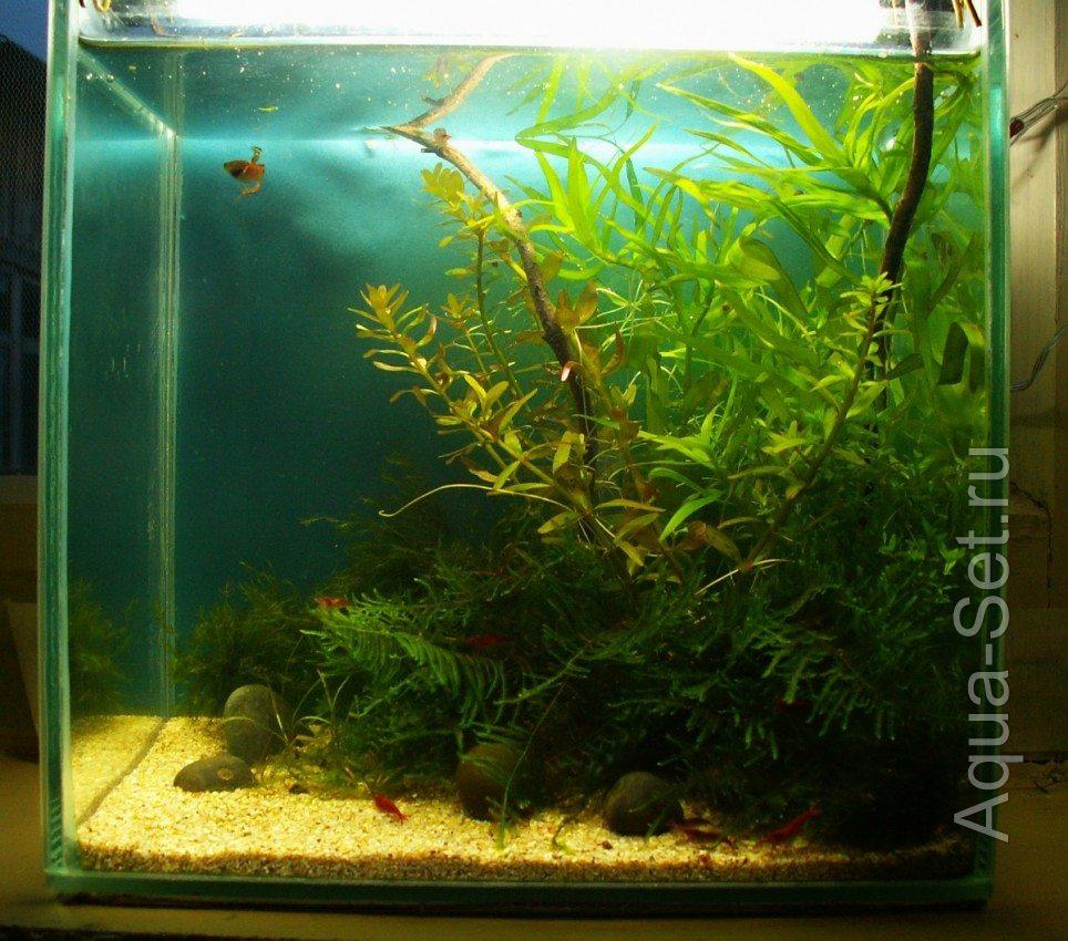 Дизайн нано аквариумов фото 7