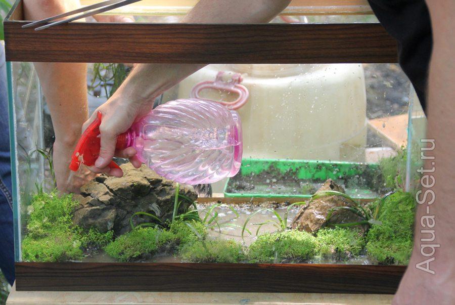 Когда можно сажать растения в аквариум 227