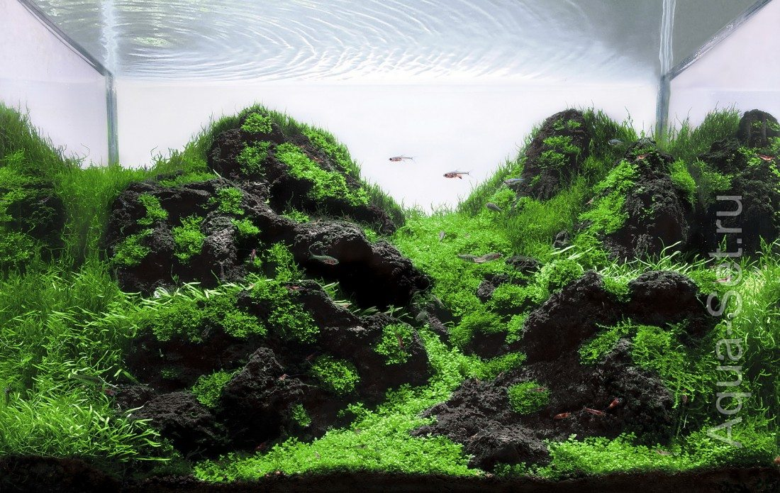 Aquatic Scapers Europe 2011 - top30 nano