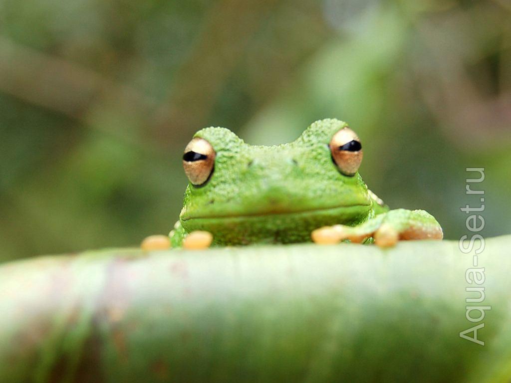 Фотоподборка лягушек